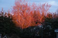 Fiery Sunset!